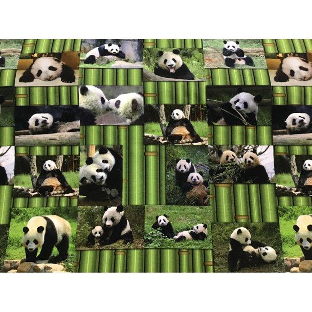 Jersey digital, Panda i grøn bambus