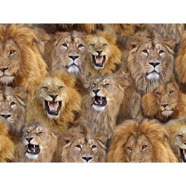 Jersey digital, Løven er løs