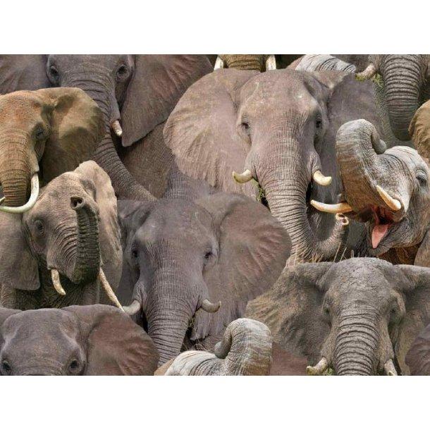 Jersey digital, flotte elefanter